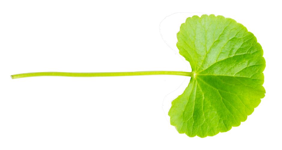 Feuille naturopathie soins bien-être